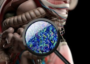 Gut bacteria and insulin resistance