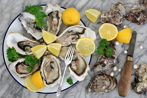 oysters blood circulation