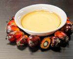 palm oil cholesterol