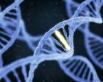 prostate genes