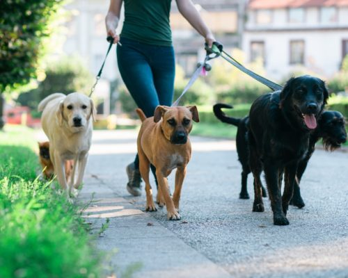 dog walking physical activity