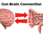 brain-gut connection. Communication between these organs is important to understand the role of intestinal flora in the emergence of diseases such as depression. 3D rendering