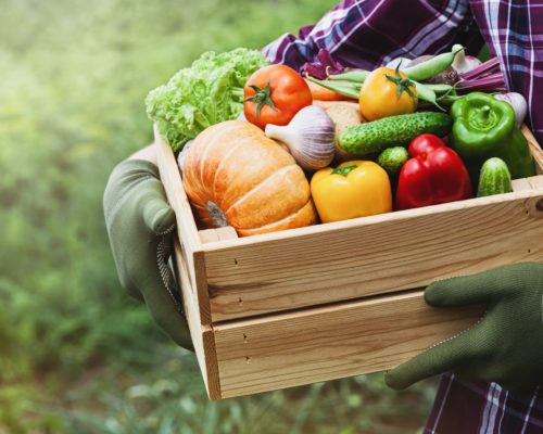 Farmer holds in hands wooden box with vegetables produce on the background of the garden. Fresh and organic food.