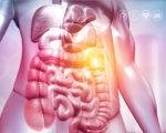 Human body with digestive system on medical background. 3d illustration