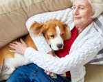 Directly above view of positive senior woman in soft cardigan cuddling favorite Beagle dog while sleeping on sofa