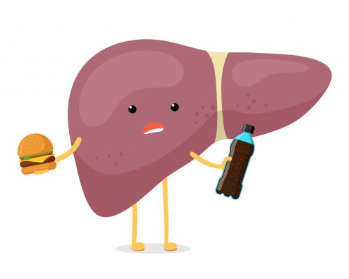 Sick unhealthy ill liver character hold in hand fast food soda beverage bottle and burger. Human exocrine gland organ destruction problem concept. Vector bad nutrition addiction hepatic illustration