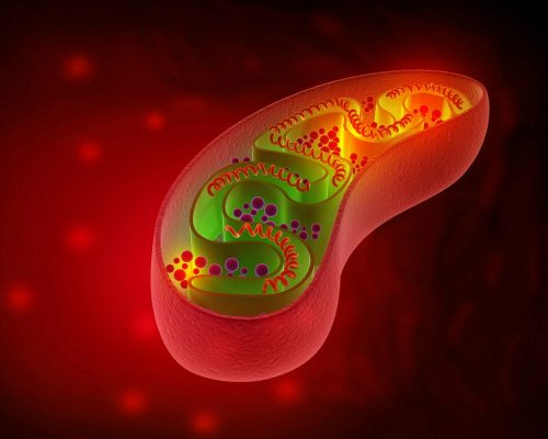 Cell mitochondria anatomy. 3d illustration