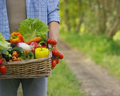 Portrait of a happy young farmer holding fresh vegetables in a basket. Concept biological, bio products, bio ecology, grown by own hands, vegetarians, salads healthy