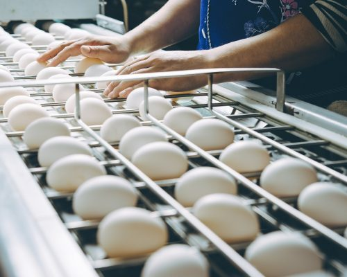 egg factory plant agriculture poultry chicken farm product industry