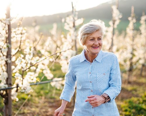 Front view of senior woman walking in orchard in spring. Copy space.